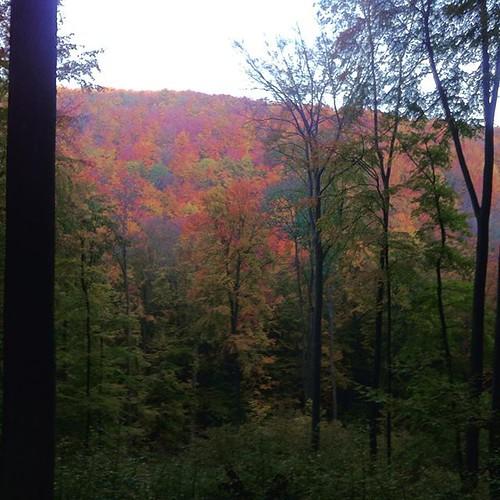 View across Gösselgrund in the morning...