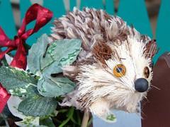 #5172 hedgehog () (Nemo's great uncle) Tags: xmas mammal furry decoration bakery  hedgehog hiro sakuragaoka  setagayaku tky  erinaceinae