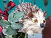 #5172 hedgehog (ハリネズミ) (Nemo's great uncle) Tags: xmas mammal furry decoration bakery 東京 hedgehog hiro sakuragaoka 世田谷区 setagayaku tōkyō ハリネズミ erinaceinae 針鼠 桜丘二丁目