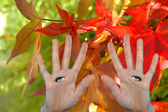 Talk To The Hands (swong95765) Tags: blue autumn cute beauty leaves eyes hands bokeh future imagination biology possibilities implants naturalselection bioengineering adaotation
