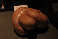 Science World - October 15, 2015 (rieserrano) Tags: organ caribou bodyworlds plastination
