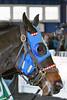 2015-12-06 (20) r5 #5 Scent of Gold at Laurel Park (JLeeFleenor) Tags: photos photography md marylandhorseracing marylandracing laurelpark horses thoroughbreds equine equestrian cheval cavalo cavallo cavall caballo pferd paard perd hevonen hest hestur cal kon konj beygir capall ceffyl cuddy yarraman faras alogo soos kuda uma pfeerd koin حصان кон 马 häst άλογο סוס घोड़ा 馬 koń лошадь paddock maryland