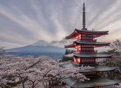 Chureito Pagoda (v-_-v) Tags: japan sunset asia travel pagoda mount fuji chureito fujiyoshida cherry blossom volcano sakura lpultimate explored