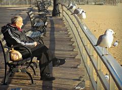 Standing Guard (Robert S. Photography) Tags: boardwalk scene birds gulls metal railing man bench winter blues thinking pigeons brooklyn brightonbeach coneyisland nyc sand beach nikon color l340 iso80 december 2016