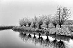 Trees (++Rob++) Tags: spaarndam haarlem blackwhite zwartwit bomen trees reflection bestcapturesao elitegalleryaoi