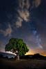 La encina y la vía (Javier Rosano | Un poquito de fotografía) Tags: blue 1740 a7 a7ii árbol canon encina estrella ii javierrosano lactea linterna madrid1 makingof nocturna segovia sony via