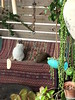 little comfort (claudia.joseph16) Tags: cats wild warming up cold day carpet sleeping resting animals garden