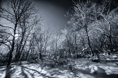 Out here (citrusjig) Tags: pentax sigma1020mmf456 infrared bw090redfilter blackandwhite manualfocus toned trees forest winter wisconsin infraredconvertedbody kx
