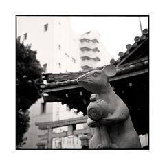 rat • osaka, japan • 2015 (lem's) Tags: rat statue temple city vilel osaka japon japan rolleiflex planar