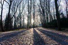 Warsaw, Poland - Łazienki Park (GlobeTrotter 2000) Tags: europe happy lazienki nye new poland warsaw winter year garden park sunset tourism travel łazienki