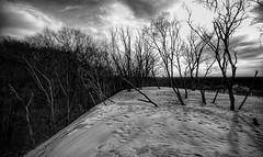 Top of the Dunes (mswan777) Tags: tall sand dune warren dunes michigan bridgman ansel landscape tree wind winter shadow cloud nikon d5100 sigma 1020mm