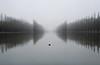 Misty Morning (David Khutsishvili) Tags: davitkhutsishvili dkhphoto sceaux france reflection nikon d5100 1855mm 500px