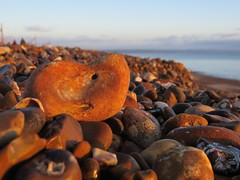 6914 One in a million (Andy - Busyyyyyyyyy) Tags: 20170111 bbb beach goldenhour kent pebbles ppp romneysands shingle sss