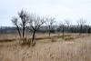 In Starre (JKLensman) Tags: fujixt2 fujixf18135 berlin wiesen felder winter kahlebäume