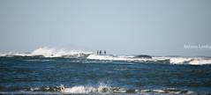 Pescando robalos (Antonio Lomba) Tags: pesca esteiro oceano mar lubina robalo caña acirrar surfcasting magníficos miño guarda desembocadura robaliza airelibre agua ola