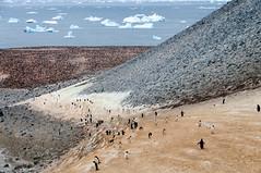 Penguin Highway (durktalsma) Tags: adeliepenguin antarctica pauletisland antarcticconvergence highway island lanes penguins road rock fav10 fav20 fav30 fav40 fav50 fav60 fav70 fav80 fav90 fav100 fav110 fav120 fav130 fav140 fav150 fav160 fav170 fav180