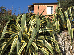 the agaves and the house (ludi_ste) Tags: agave agavi agaves green house casa mediterraneanmaquis macchiamediterranea