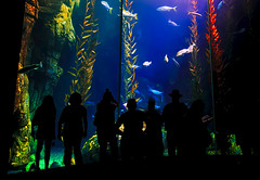 Window to Another World (disneymike) Tags: california fish silhouette aquarium nikon d2x silhouettes longbeach 1224mmf4g nikkor flickrmeet flickrmeetup aquariumofthepacific longbeachaquarium flickrmixr fiveflickrfavs
