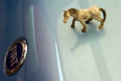 I heard you needed more horsepower... (Erik Kolstad) Tags: blue horse car norway canon reflections punto fiat hood bergen bonnet title1