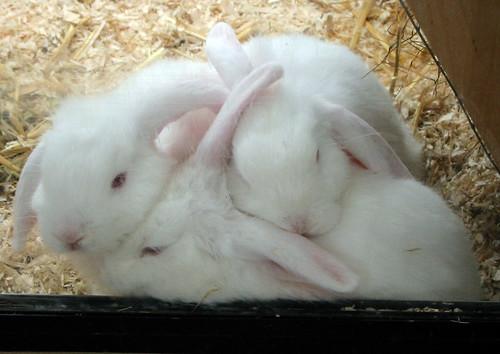 Bunny Squash