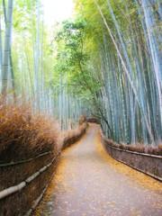 (511) 嵐山竹林步道 (Chrischang) Tags: japan geotagged kyoto 2006 arashiyama 京都 日本 嵐山 kansai 関西 20060511 geo:tool=gmif geo:lat=35017371 geo:lon=135672451
