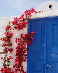 Red flowers, blue door - by eugene