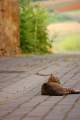 Siesta (Ignacio Lizarraga) Tags: primavera cat spring nikond50 gato alava zb euskalherria euskadi basquecountry paisvasco katua zyber peñacerrada urizaharra