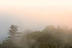 Veiled sunset (tychay) Tags: california trees sunset mist clouds landscape outdoors landscapes nikond70 outdoor dxo santacruzmountains levels whitebalance montebelloopenspacepreserve 70200mmf28gvr appleaperture shadowhighlight nikcolorefexpro digitalphotostylerrusset veiledsunset costanoa2006