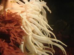 DSC01484 (Latindog) Tags: trip fish aquarium shark maryland baltimore seaanemone baltimoreaquarium