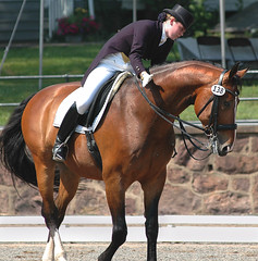 FEI Young Rider Freestyle Test (Rock and Racehorses) Tags: horses nj gladstone dressage usef