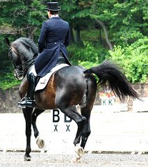 Style! (Rock and Racehorses) Tags: horses nj gladstone dressage usef