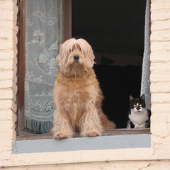 Honeymooners (Frizztext) Tags: camera two dog pets window cat canon geotagged togetherness couple honeymoon belgium wordpress existentialism powershot galleries pairs socrates geotag bobtail 500x500 hainault a700 100faves xanthippe frizztext liberchies concubinage flickrcomments pontacelles