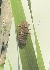 And just WHAT is *THIS*???!!! (Susan LeBlanc) Tags: whatisthis bug insect scary monstrosity creature unidentified