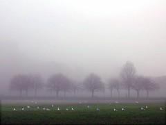 Meadows in the Mist 3/3 (photojennic) Tags: park uk seagulls mist home beautiful fog scotland edinburgh britain hometown meadows scottish neighborhood neighbourhood waytowork haar photojennic thebiggestgroup onegooddayin2006