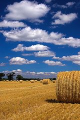Hay Bales (Stu Worrall Photography) Tags: field wales canon eos wheat north straw hay bales bretton 30d interestingness8 sigma1850mmf28ex stuworrall stuartworrall