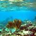 Underwater garden By Zsaj