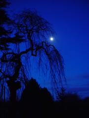 Moon at Taraloka