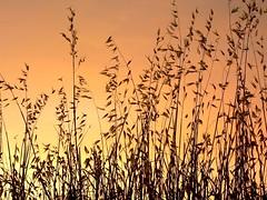 Summer sunset / Puesta de sol de verano