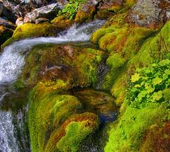 Mountain creek (A closer view) (Krogen) Tags: nature norway landscape norge natur norwegen olympus c7070 noruega scandinavia krogen landskap noorwegen noreg skandinavia photomatix oppland synnfjellet hugulia nordreland