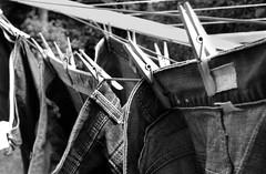 Hung Up (Chris_J) Tags: original blackandwhite bw garden blackwhite kodak gimp dry clothes clean jeans wash trousers denim pointandshoot washed pegs hm amateur thegimp peg washing pointshoot kodakpointshoot kodakpointandshoot kodakdx6340 dx6340 washingline dryin