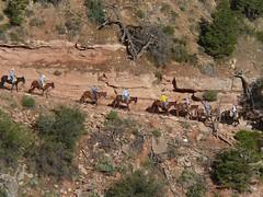 P1050261 (marinaneko) Tags: grand canyon tz1 06081417