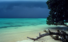 INDIA -  Andaman Islands (BoazImages) Tags: ocean sea india white tree beach nature topf25 beautiful rain topv111 clouds ilovenature island grey sand asia paradise monsoon tropical whitesand strom tropics specland