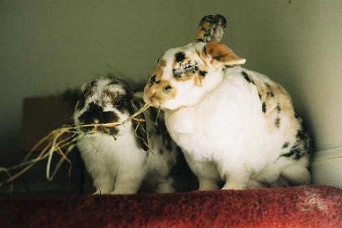 Paisley & Dora
