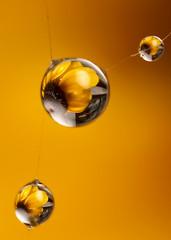 Three (Lord V) Tags: macro water beautiful refraction raindrop abigfave