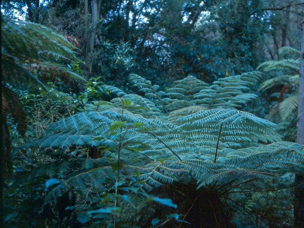 Ferns, Hagley Park Botanical Garden