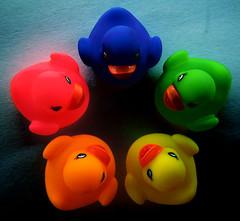 planning the bank robbery (ion-bogdan dumitrescu) Tags: pink blue red orange green yellow dark circle fun duck mac funny gang ducks evil bank rubber robbery quack robber robbers bitzi ibdp findgetty ibdpro wwwibdpro ionbogdandumitrescuphotography