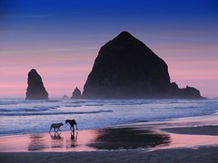 cannon beach dogs (jody9) Tags: sunset dogs topf25 oregon coast cannonbeach haystackrock eyecatcher
