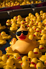 Unique [Explore] (LAKAN346) Tags: summer vacation usa cute smile sunglasses birds yellow fun cool pond nikon funny dof bright lol unique interestingness1 ducks sunny august 2006 shades va haha cheer d200 nikkor countyfair 1870mm princewilliam thecontinuum abigfave