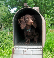 You've got (Teddy) mail! (Doxieone) Tags: dog brown cute green mailbox puppy interestingness long mail teddy chocolate dachshund explore 101 v final exploreinterestingness hi haired mostpopular ggg 1002 longhaired onexplore final2 topfavorite explored ggggg abigfave 29523825 39330828 49930915 50130915 doxieone101 89433426 teddyset 121936929 ddate