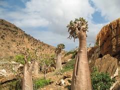 Yemen  Isle Socotra 024 by Zinaida M.